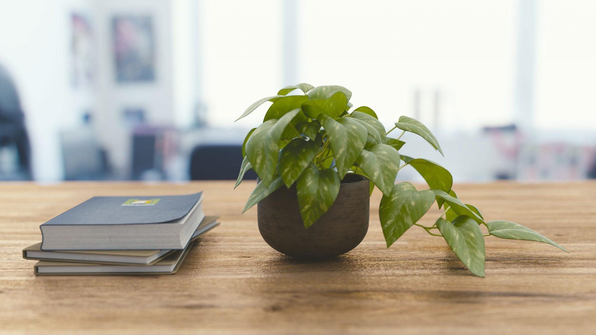Plant On Desk Office Productivity