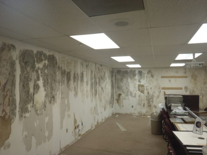 Severe mold infestation in an office
